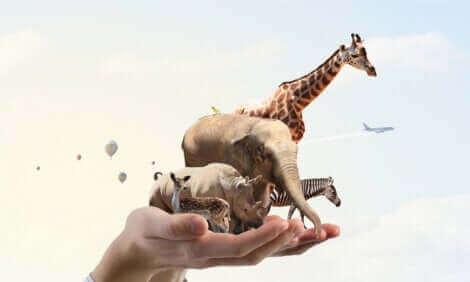 Des animaux miniatures qui tiennent sur une main.