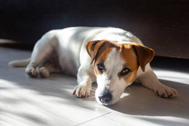 Les bienfaits du soleil pour les animaux de compagnie.