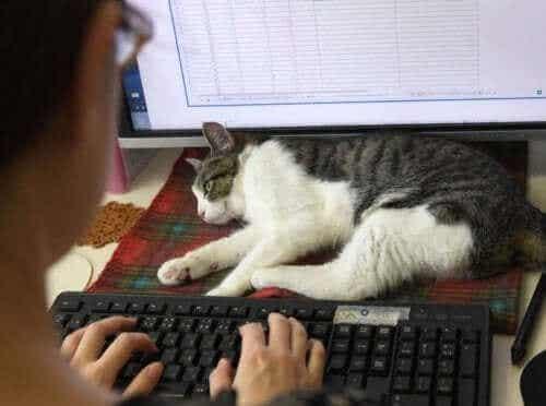 Le Japon donne du travail aux chats !