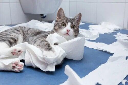 Chat en train de jeter du papier toilette par terre.