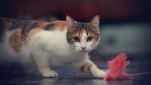 Un chat qui joue avec un objet au sol.