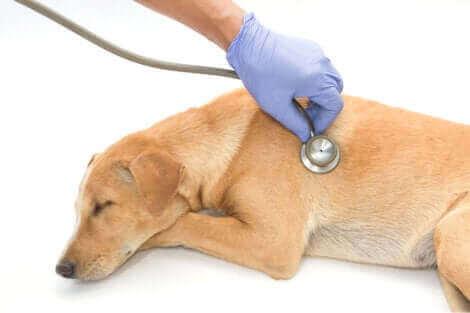 Un chien en pleine consultation vétérinaire.
