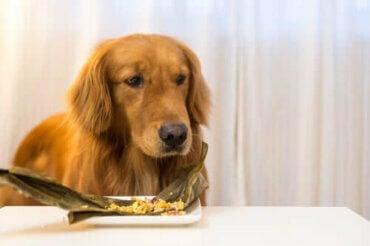 Qu'est-ce que la nourriture surgelée pour chiens ?