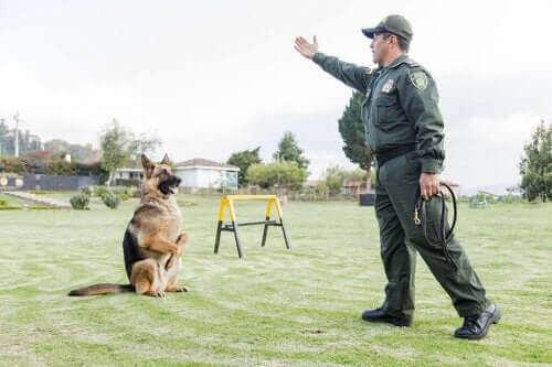 Un chien policier en pleine action.