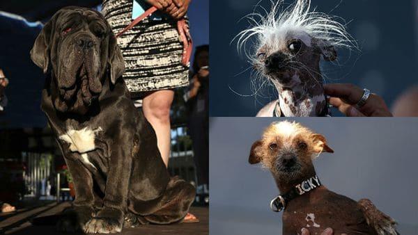 Des chiens considérés comme laids.