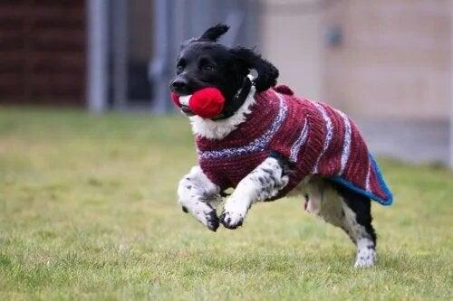 Des pulls pour chiens noirs sans-abri