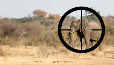 Un éléphant en ligne de mire.