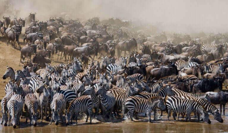 Quels sont donc les animaux migrateurs ?