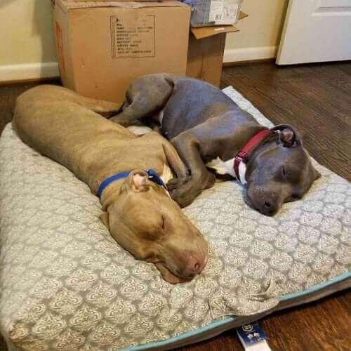 Hansel et Gretel, deux chiens inséparables.