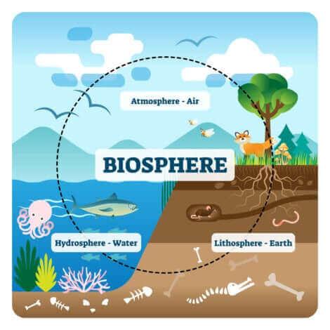 Un schéma qui montre le fonctionnement d'un écosystème.