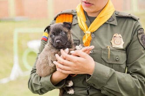 Une série rend hommage aux chiens policiers