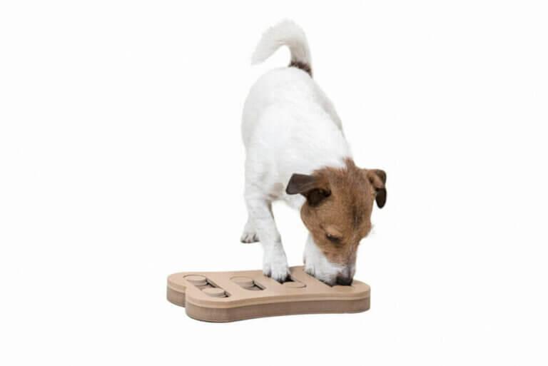 La stimulation mentale des chiens par le jeu