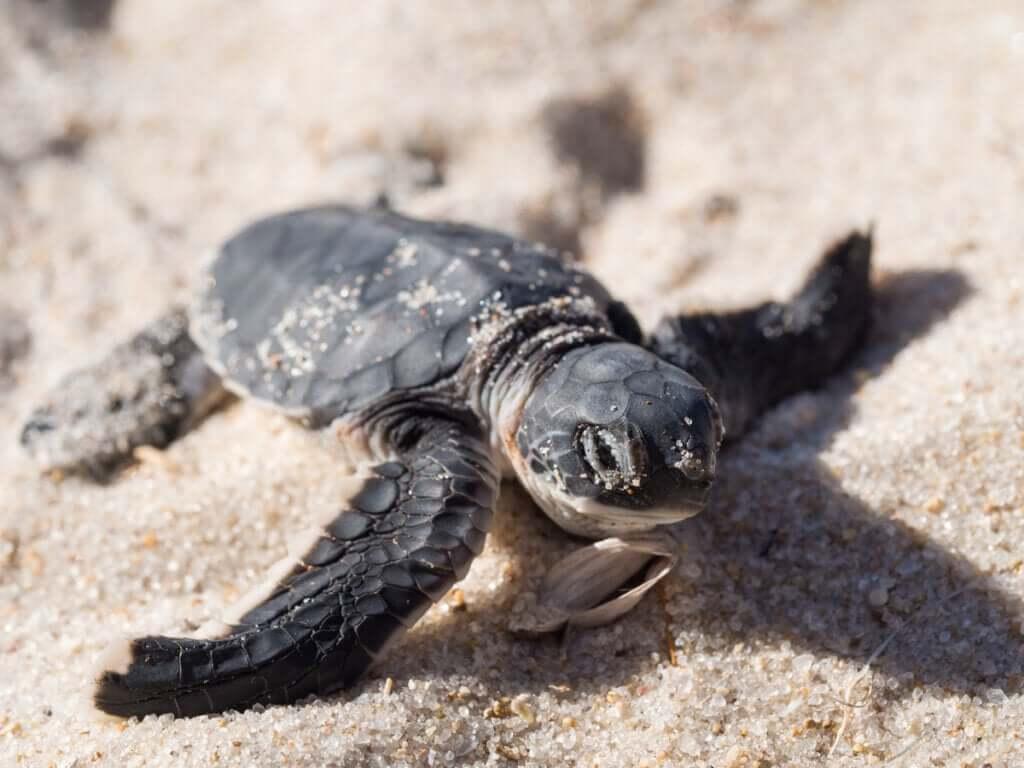L'effet du commerce illégal chez les espèces animales