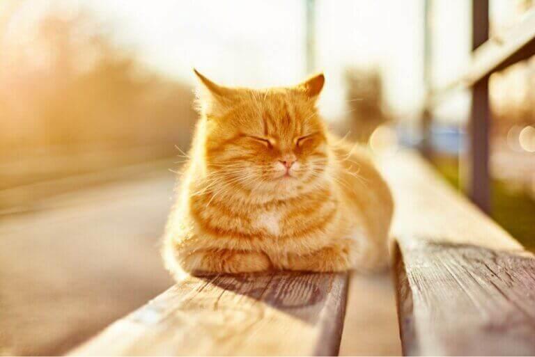 Les bienfaits du soleil pour les animaux domestiques
