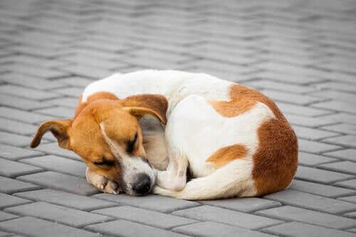 Un chien abandonné.