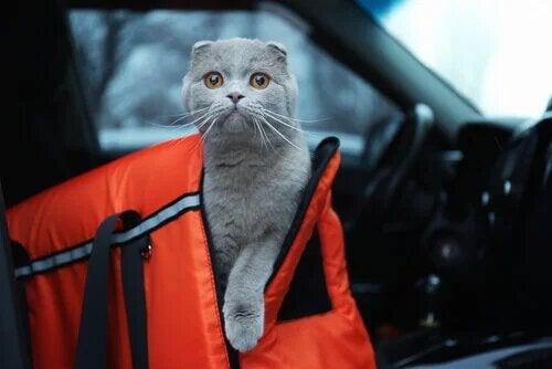 Animal en voiture : les précautions à prendre