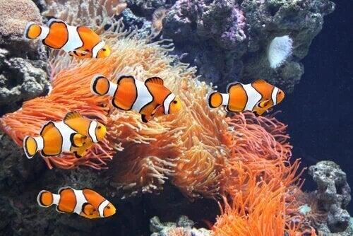 Il s'agit d'un aquarium marin.