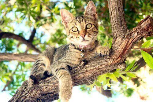 Un chat couché sur une branche.