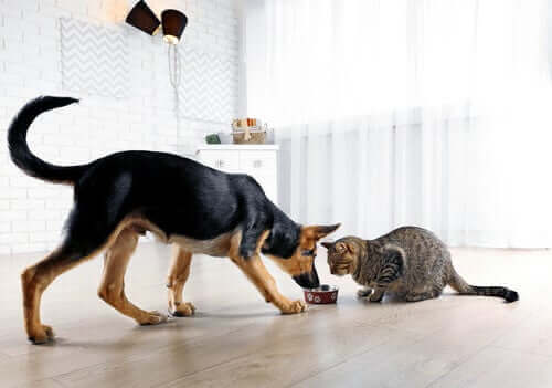 Comment ne pas déséquilibrer un chien ou un chat ?