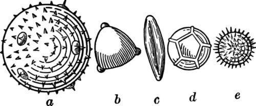 La palynologie, un regard sur la végétation du passé.