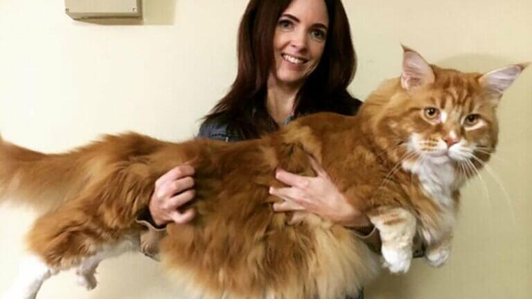 Découvrez le plus long chat du monde