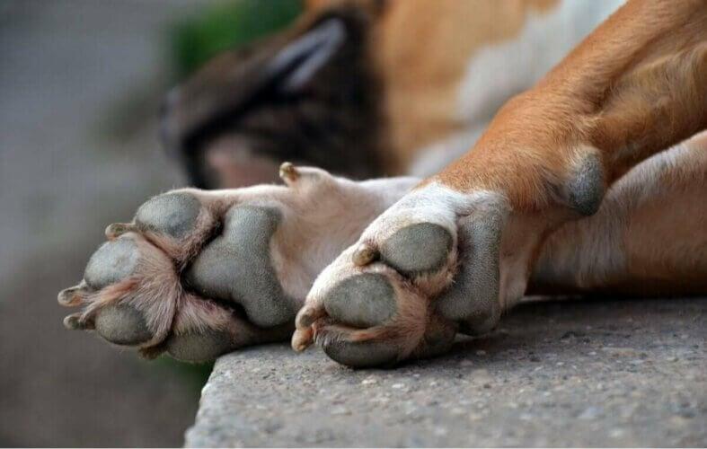 Zoom sur les pattes d'un chien.