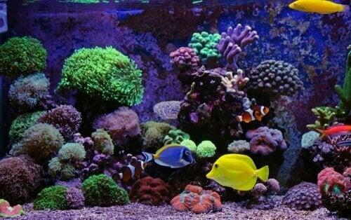 Aquarium marin : un bout de mer à la maison.