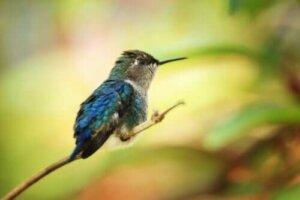 Les plus petits animaux du monde. Quelles beautés !