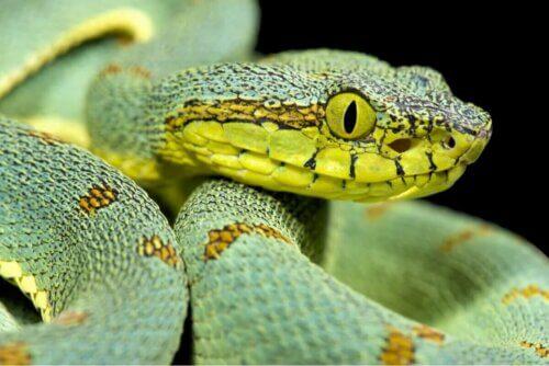 Un serpent vert.