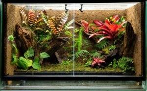 Un terrarium tropical.