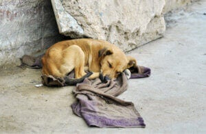 Un chien abandonné dans la rue.