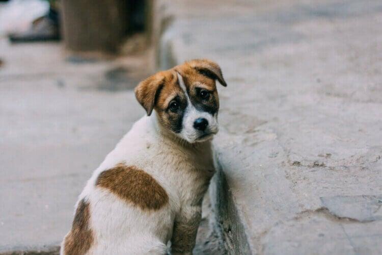 La moitié des chiens offerts à Noël sont abandonnés