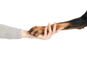 L'histoire de la domestication des animaux