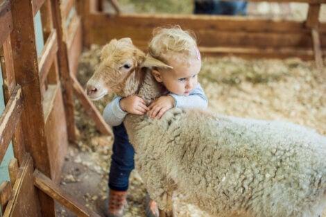Un enfant avec un mouton.