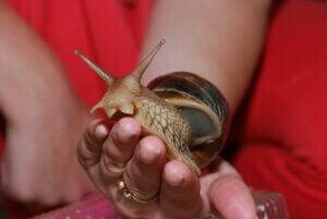 Un escargot posé sur la main d'une femme.