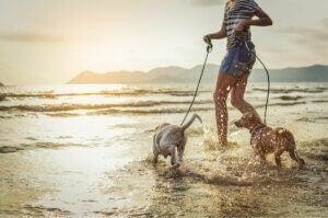 Une femme qui promène ses chiens au bord de l'océan.