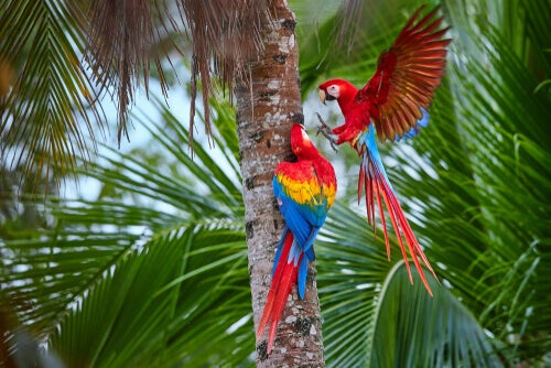 Les perroquets sauvages menacés par le commerce mondial
