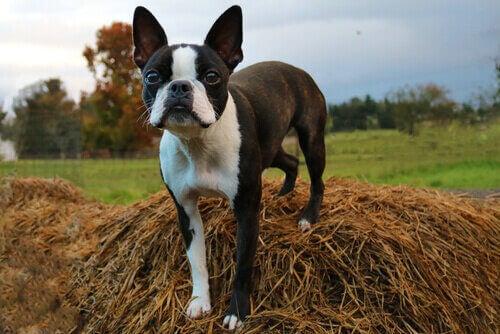 Quelles sont les races de chiens à la mode ?