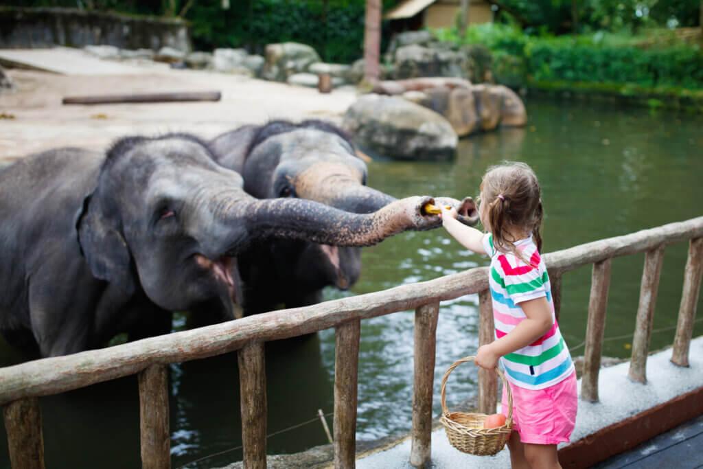 Les soins nécessaires pour le bien-être des éléphants