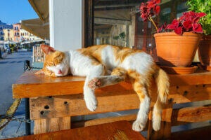 Un chat qui dort sur une table.