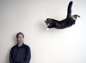 Un chat en plein saut.