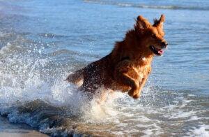 Un chien dans l'eau.