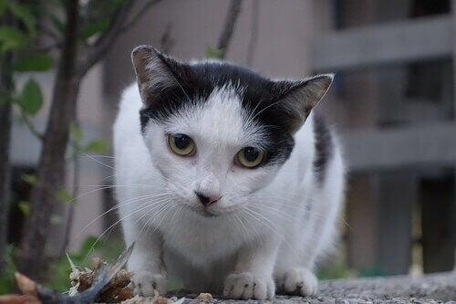 Les comportements étranges des chats