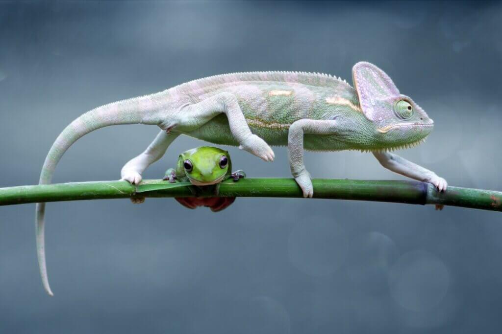 6 différences entre les reptiles et les amphibiens