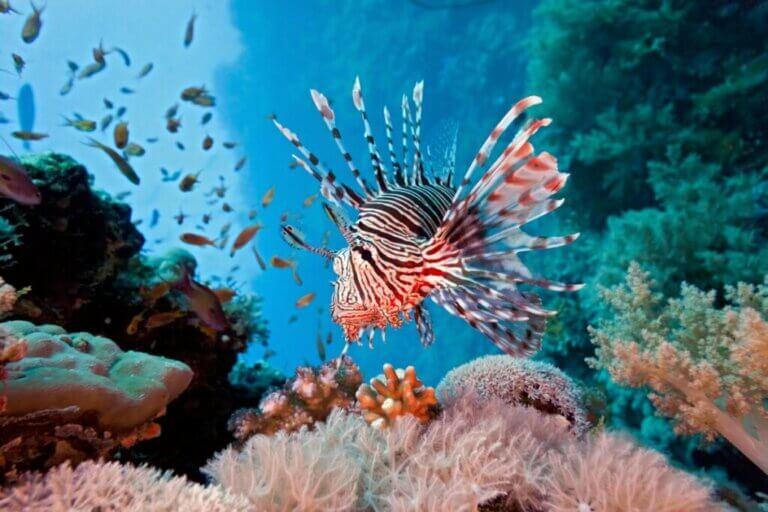 6 espèces aquatiques envahissantes