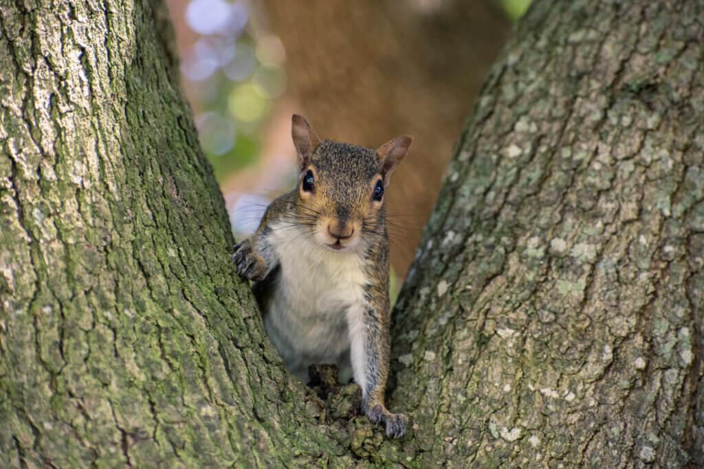7 faits curieux sur les écureuils