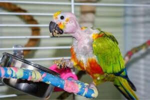 Un oiseau dans une cage.