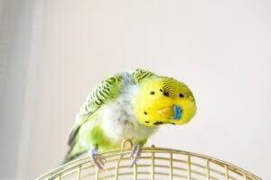 Un oiseau perché.