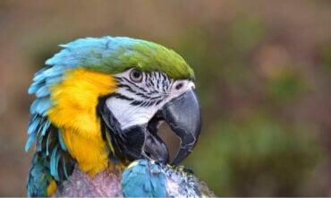 Le picage chez les oiseaux : causes et traitement