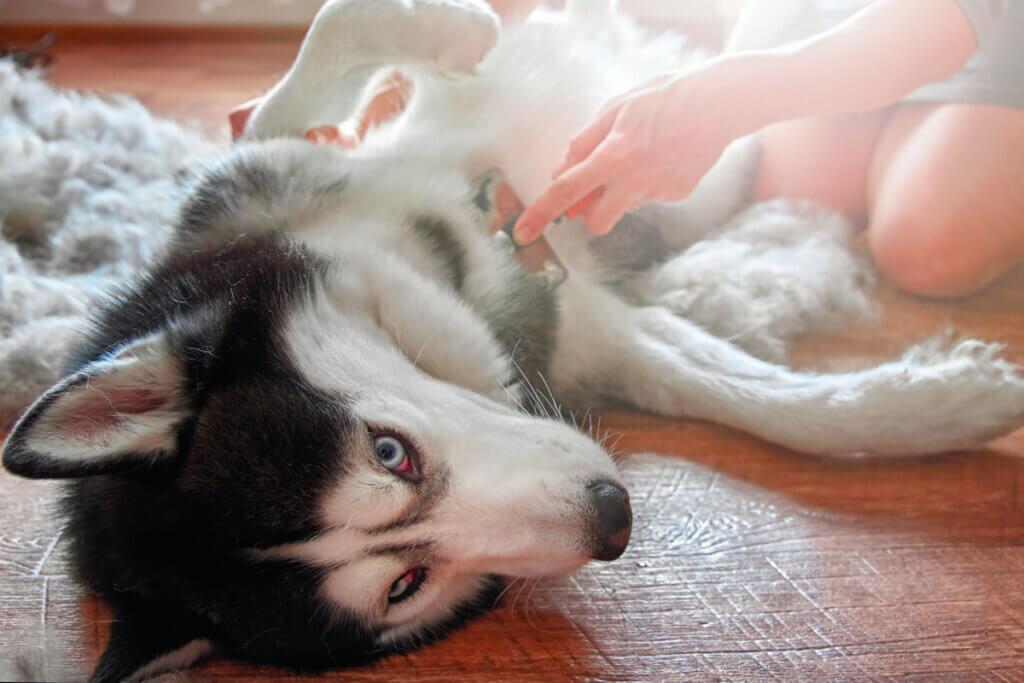 Problèmes digestifs chez les chiens : symptômes et causes